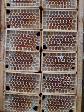 6 honning