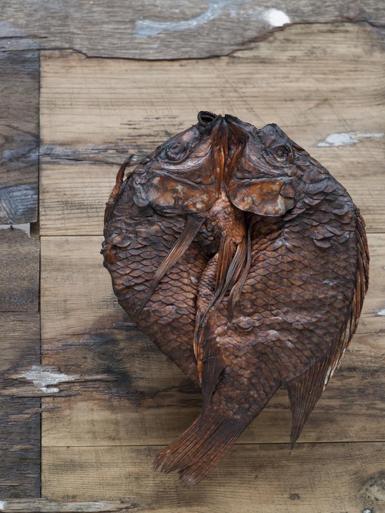 oppdrettsfisk tørket røkt tilakia