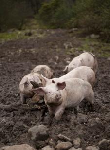 Haugen gris foto thor brødreskift