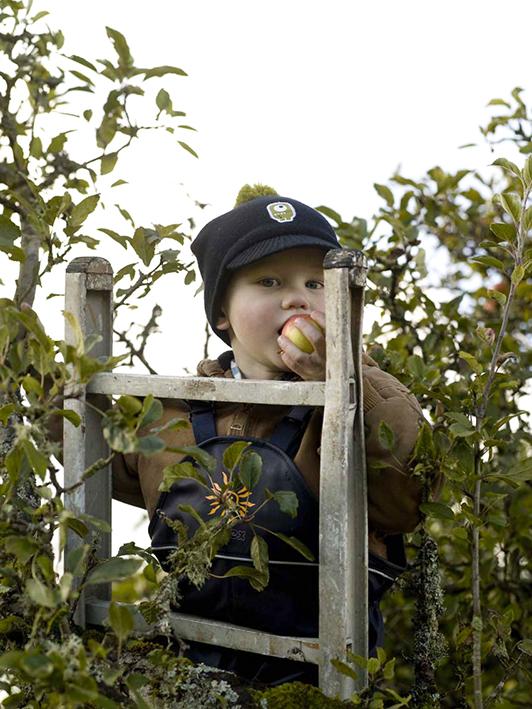 theo plukker epler foto thor brødreskift